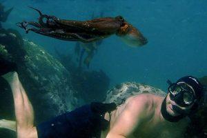 My Octopus Teacher review